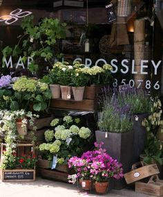 Martyn Crossley - The Florist, Windsor; via Sally Page