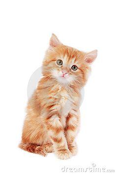 Cute foxy-red kitten sitting on white background