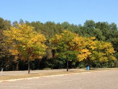 Fall color starting in a park down the road...