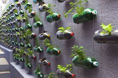 genius recycled PET bottles vertical garden • rosenbaum design studio • via treehugger