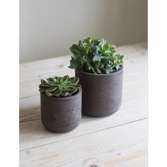 Straight Cement Plant Pots in Cocoa on table