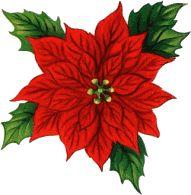 Christmas flowers Graphic Animated Gif - Graphics christmas flowers 673043