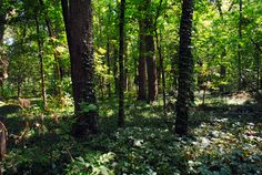 Hiking Trails In and Around Louisville Strada Real Estate Group, LLC Louisville Kentucky Call us today. http://www.stradaregroup.com