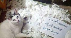 cat-shaming-50__605.jpg (800×431)