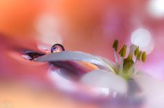 Photograph Fade out by Miki Asai on 500px