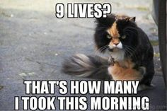 Watch the wonderful funny cat memes clean hilarious pets pictures Funny Animal Memes, Funny Cat Videos, Funny Animal Pictures, Funny Animals, Cute Animals, Funny Quotes, Funny Pix, Animal Funnies, Hilarious Pictures