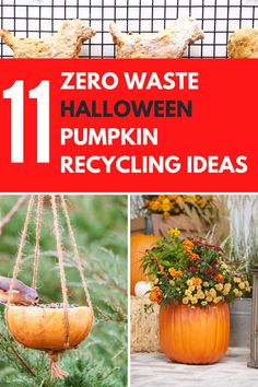 Something you may not have not given much thought to before is Halloween Pumpkin Recycling. Our list includes zero waste ideas from pumpkin soup and pumpkin bread recipes to garden projects like bird feeders, planters and homemade dog treats. This year we are encouraging people to try the zero waste lifestyle and reuse their leftover pumpkins with these must-try diy ideas on how to get creative with your old and tired jack-o-lanterns. #zerowaste #pumpkins #recycling #recyclingideas #halloween