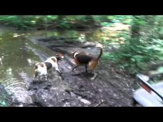 hunting dog types