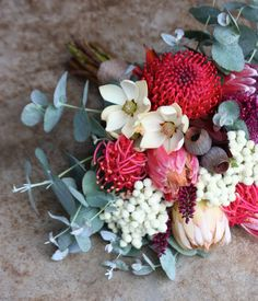Swallows Nest Farm Waratah, Tasmanian Waratah, Berzelia, Leucadendron, Protea, Gumnuts Brides Bouquet