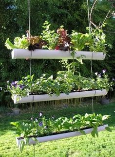 Hanging Gutter Herb Garden.  Have one of these hanging in the backyard all planted full of varieties of lettuce, spinich & arugula!!  Can't wait to pick me a salad this summer!!