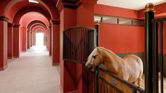 Stable Mates: Horse-friendly luxury hotels Our love affair with horses has seen the emergence of a new form of tourism – luxury hotels with an equestrian focus.