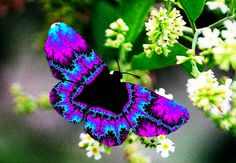 psychedelic butterfly