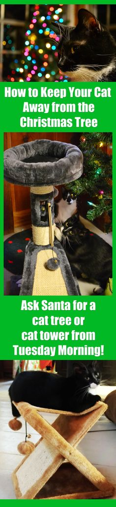 With a seven-month-old and three-year-old cat in the house, I was worried about the fate of our Christmas tree--but the @tuesdaymorning cat trees solved the problem! Ochi and Lucky LOVE their cat trees and towers and stay busy playing with their new goodies instead of our holiday ornaments. The trees--and other cat gifts at your local #TuesdayMorning like cat toys and cat beds--make great gifts for your cats, your fellow cat lover, or a local rescue or animal shelter! #FavoriteThings…