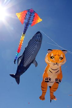 Beautiful Kites Festival of Winds Australia