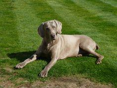 Floyd looks like my Duke :)