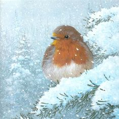 Mary Christmas, Vintage Christmas Cards, Christmas Images, Winter Painting, Winter Art, Winter Pictures, Bird Pictures, Christmas Paintings On Canvas, Robin Bird