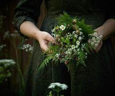 botany, flower, and flowers resmi