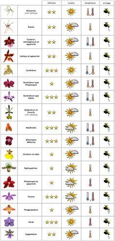 Comment soigner les orchid es selon leurs vari t s comment fils et articles - Prendre soin des orchidees ...