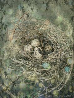 Japanese quail eggs in a nest http://www.pinterest.com/womartist/art-bird-nests/  &  http://www.pinterest.com/gewoonzo/easter/