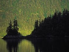 Coastal Forest, Prince William Sound, Alaska