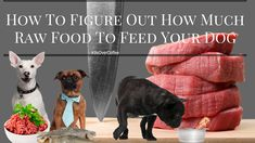 K9sOverCoffee | How To Figure Out How Much Raw Food To Feed Your Dog  My exploration into unknown raw feeding territory began 18 months ago. One of the challenges I was faced with was figuring out how much balanced raw food my pups needed to eat on a daily basis to maintain their respective weight.  http://www.k9sovercoffee.com/nutrition/how-to-figure-out-how-much-raw-food-to-feed-your-dogs/