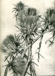 Thistles drypoint etching