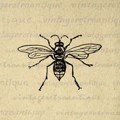 Digital Printable Bee Graphic Insect Download Illustration Image Vintage Clip Art. High resolution digital image graphic from vintage artwork. This vintage high quality printable digital artwork is excellent for printing, fabric transfers, tote bags, tea towels, papercrafts, pillows, and other great uses. Great for etsy products. This graphic is high quality, high resolution at 8½ x 11 inches. Transparent background version included with all images.