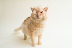 I Capture The Beauty Of Blind Cats To Help Them Get Adopted | Bored Panda Sir Thomas Trueheart had acid deliberately poured on his face. He's healing well!