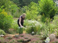 ANTHROPHYSIS: Ecological gardening: beautiful and good for biodiversity