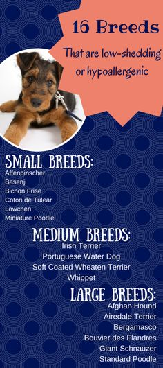 16 Breeds that are low-shedding/hypoallergenic  http://dog-training-columbia.com/?p=855