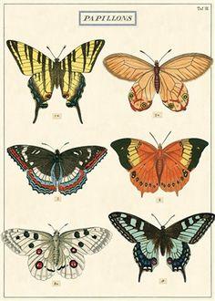Papillons Wrap (K4)