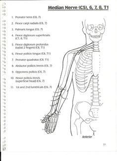 1 = Erb's Palsy 2 = Musculocutaneous N. 3 = Axillary N. 4