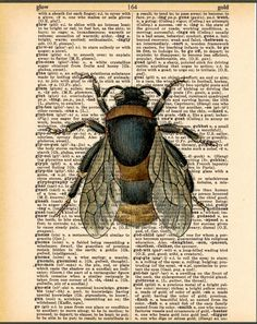 Prints on Dictionary Page, Bee Art, Vintage Bee Illustration. $10.00, via Etsy.