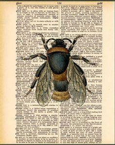 Prints on Dictionary Page, Bee Art, Vintage Bee Illustration. $10.00, via Etsy.