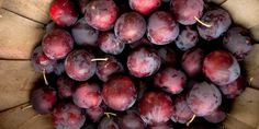 Take your family to pick fruits, berries, veggies etc. at one of these u-pick farms.