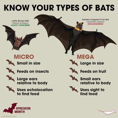 Facts of Bats by Nitin SomduttDhirsingh Walmiki (Eco-Echo) Bat Species, Animal Species, Fun Facts About Animals, Animal Facts, Animals Of The World, Animals And Pets, Wild Animals, Octopus Vulgaris, Bat Animal