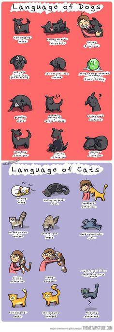 A linguagem dos nossos cães e gatos. Esse infográfico pode te ajudar a entender melhor o que o seu bichinho está sentindo.