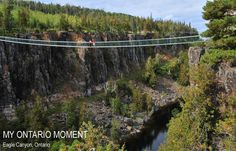 Get insider tips from travellers including, best of lists, hidden gems, local favourites and loads of ways to get the most out of your Ontario visit. Nature View, Nature Animals, Canada Travel, Comfort Zone, Getting Out, Outdoor Camping, The Great Outdoors, Ontario, Places To See