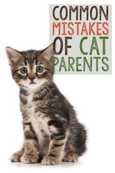 """Although cats have a reputation for being independent animals, that definitely doesn't mean, """"no care necessary."""" Even the most experienced cat owners make mistakes. But, avoiding these common ones will result in a healthier, happier cat and a better relationship between you and your furry companion! Here are five mistakes cat owners make."""