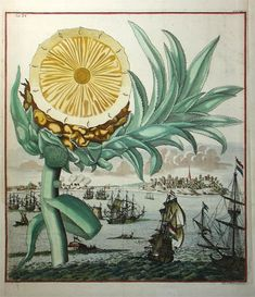 """THE LIFE OF PINEAPPLE: In the early 18th C. Johann Christoph Volckamer was a wealthy Nuremberg silk merchant with a fine greenhouse and garden where he grew exotic tropical plants. He engaged several artists and engravers to produce """"Nürnbergische Hesperides"""" (1708-14), a two-volume work featuring his collection. This engraving portrays a monumental pineapple with a maritime scene in the background. More: http://www.georgeglazer.com/prints/nathist/botanical/volckpineapple.html"""
