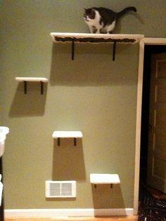 Cat shelves! by eyspahn, via Flickr