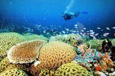 Underwater World of Halmahera Barat