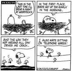 Snoopy sleepover at Woodstock's
