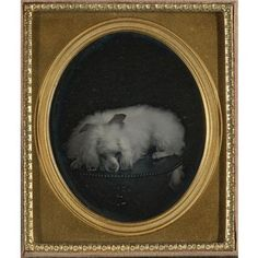 One of the first dog photographs ever taken, a daguerreotype, still in excellent condition, from the 1850s.  Love the bow and the expression.