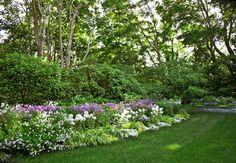 in the informal perennial bed are cleome, iris, hesperis, phlox, alyssum, guara, and nicotinia
