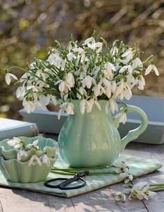 Decorating ideas with snowdrops- Whether as a bouquet (left) or in clay pots (right) – the delicate flower heads radiate fresh charm Exotic Flowers, White Flowers, Beautiful Flowers, Front Garden Entrance, Beautiful Flower Arrangements, Welcome Spring, Ikebana, Vintage Green, Spring Flowers