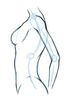 männlich Du fängst zunächst mit der Mittellinie an. Die Mittellinie ist s-förmig, wie die Wirbelsäule. In diesem Fall ist sie aber nicht direkt die Wirbelsäule, da diese weiter hinten liegt. Die beiden kleinen Kreise zeigen im Beispiel an, wo der Hals beginnt und der Brustkorb enden soll. Das große Oval stellt die Schulter dar.