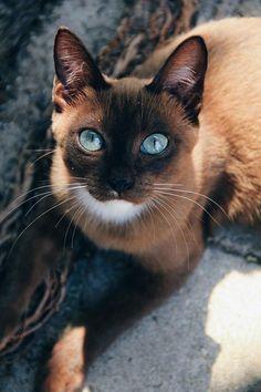 emerald eyed cat (Source: http://ift.tt/2pdAUPw)