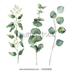 Watercolor eucalyptus round leaves and branches set. Hand painted baby, seeded and silver dollar eucalyptus elements. Floral illustration isolated on white background. For design and textile.