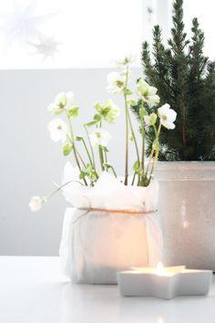 Vase Idea ... ❃∘❃✤ॐ ♥..⭐.. ▾ ๑♡ஜ ℓv ஜ ᘡlvᘡ༺✿ ☾♡·✳︎· ♥ ♫ La-la-la Bonne vie ♪ ❥•*`*•❥ ♥❀ ♢❃∘❃♦ ♡ ❊ ** Have a Nice Day! ** ❊ ღ‿ ❀♥❃∘❃ ~ Tu 22nd Dec 2015 ... ~ ❤♡༻ ☆༺❀ .•` ✿⊱ ♡༻